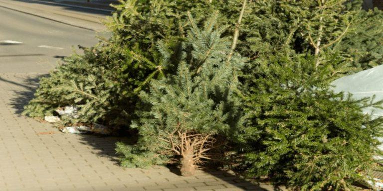 Wohin mit dem Weihnachtsbaum?
