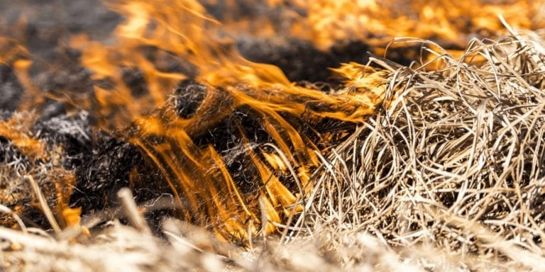 Versuchte Brandstiftung in der Höllenschlucht
