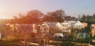 Schrebergärten im Sonnenuntergang