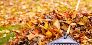 Laub, Gartenarbeit, Herbst