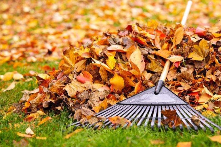 Laub – Rechte und Pflichten rund um die bunte Herbstpracht