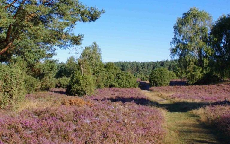 Naturpark Lüneburger Heide Herbstcamps ersetzen ausgefallene Sommercamps