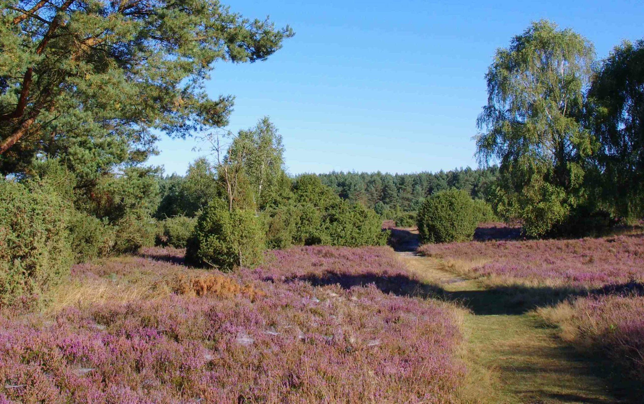 Buchholz Lüneburger Heide