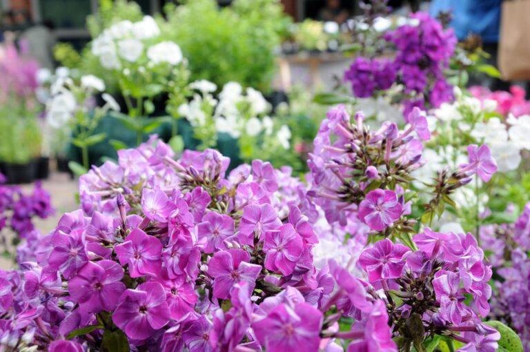 Blütenpracht am Kiekeberg: Sommerlicher Pflanzenmarkt mit 80 Ausstellenden